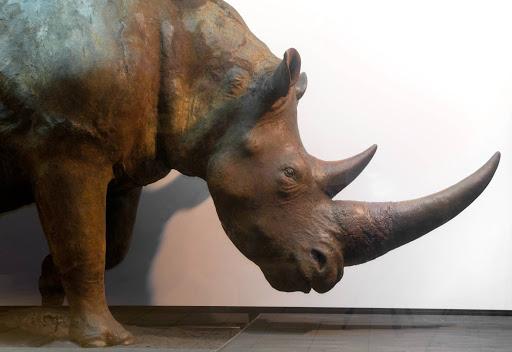 Z nosorożcem włochatym sam na sam